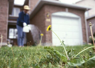 Is Bleach a Weed Killer? Kill Weeds with Bleach