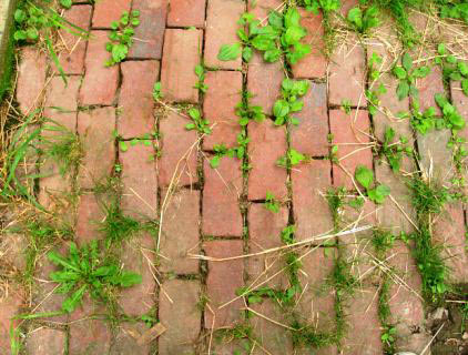 How To Kill Weeds Permanently Get Rid Of Weeds Forever