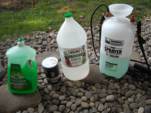 Diy Vinegar Weed Killer Will Vinegar Really Kill Your Garden Weeds
