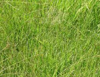 how to kill weeds without poison