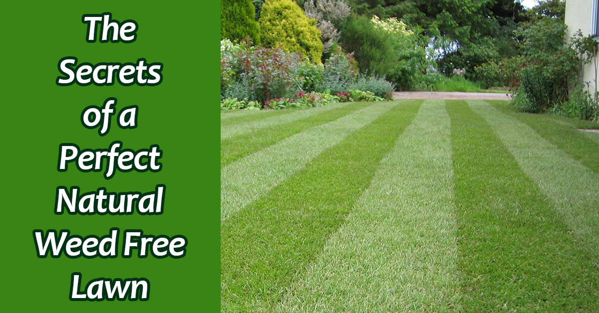 lawns for you create maintain amp grow the perfect lawn english edition