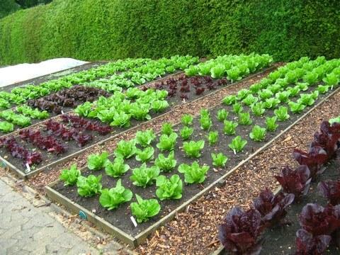 Kill Weeds In Vegetables Gardens Get, Weed Control In Vegetable Garden