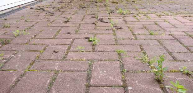 How to Kill Weeds Permanently, Get Rid of Weeds Forever
