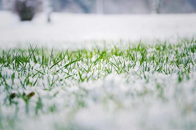 Planting grass seed in the winter