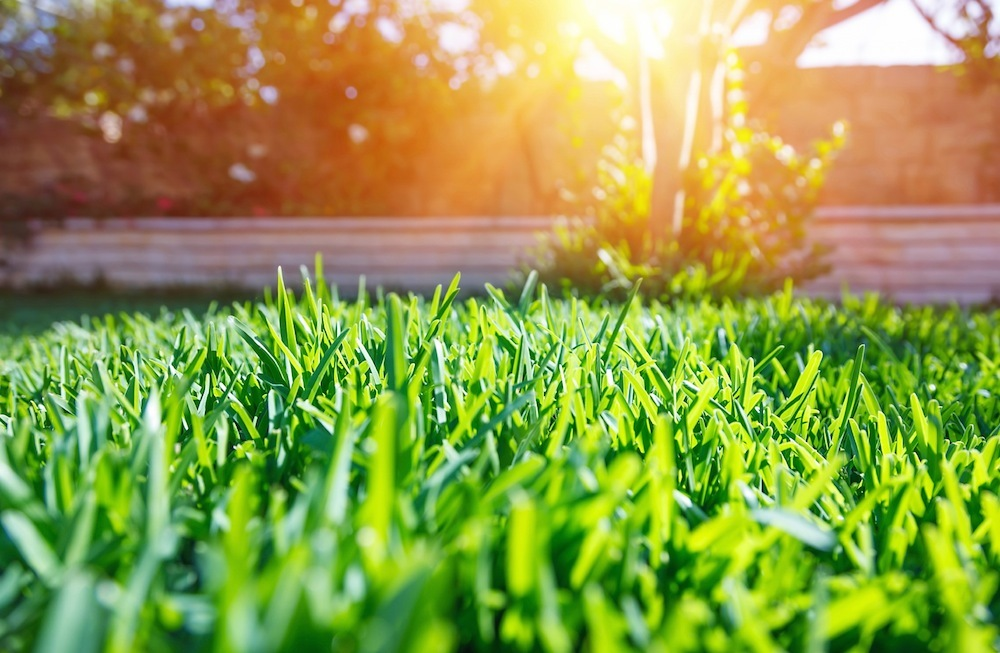 plant grass seed in summer