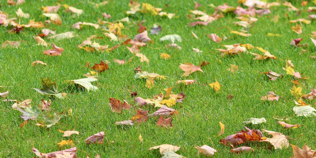 Why Autumn is good for planting grass seeds